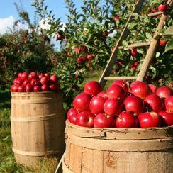 organic farming subsidy