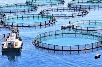 aquaculture business ideas