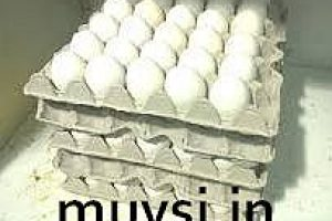 egg tray making business