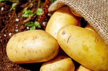 potato processing business ideas