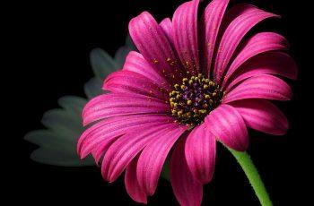 floriculture business ideas