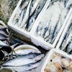 fish farming business ideas