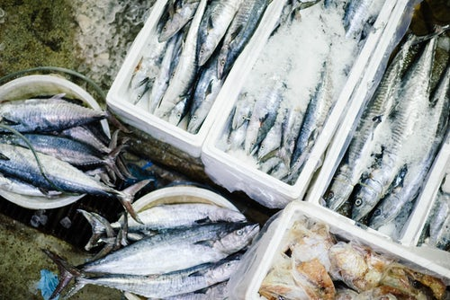 Fish Farming Business Ideas - Top 15 Profitable Low Cost Opportunities
