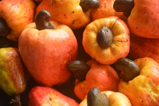 how to start cashew farming