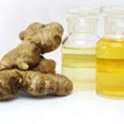 ginger oil manufacturing