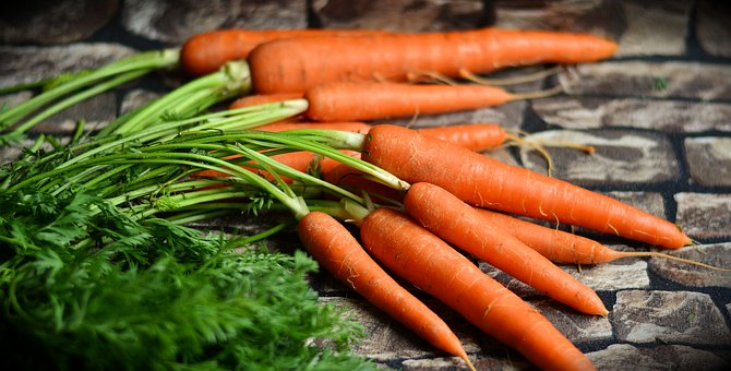 carrot cultivation