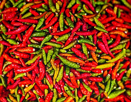 chilli farming business plan