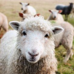 aspire scheme for promoting rural entrepreneurs